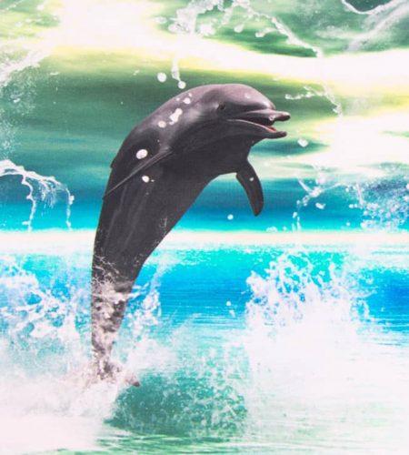 delfin fehér5